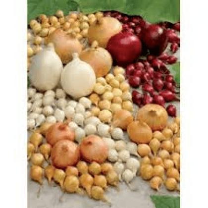 Osiva semena Slevov kupny erven 2020 (aktuln)