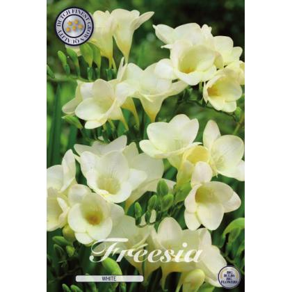 Fresia - Single White 15ks