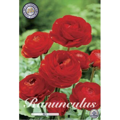 Ranunculus - Red 10ks