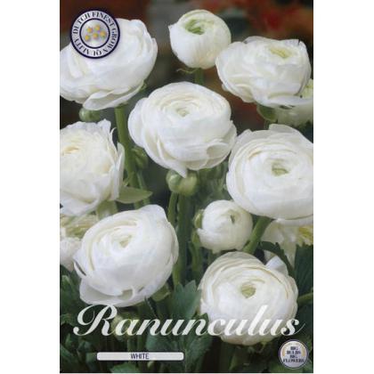 Ranunculus - White 10ks
