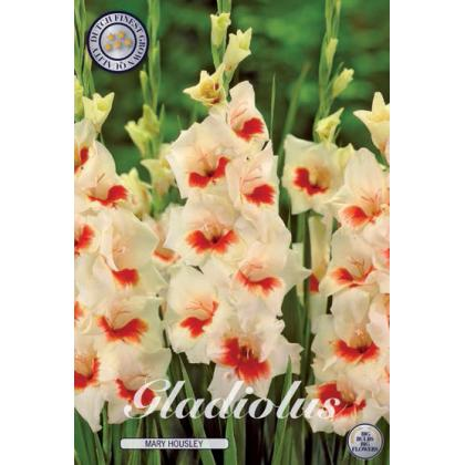 Gladiolus - Mary Housley 10ks