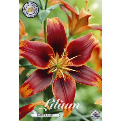 Lilium - Forever Susan 2ks