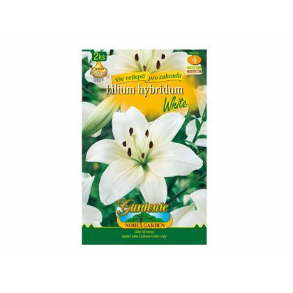 Lilium asiatic - White 2ks