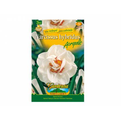 Narcis- Acropolis 3ks