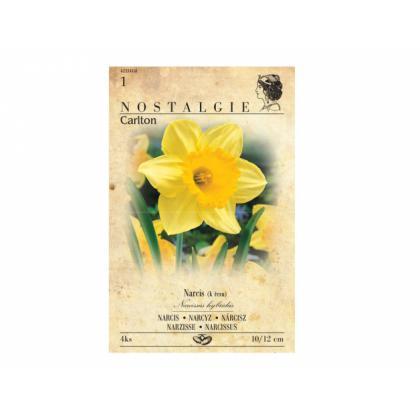 Narcis- Carlton 4ks