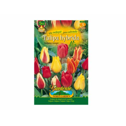 Tulipán, Greigii hybridy mix 5ks