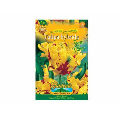 Tulipán papagájovitý- Texas Flame 4ks