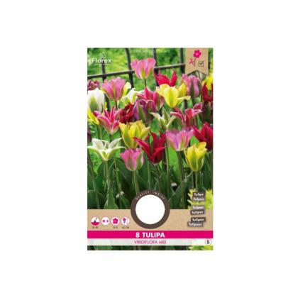 Tulipán zelenokvetý mix 8ks