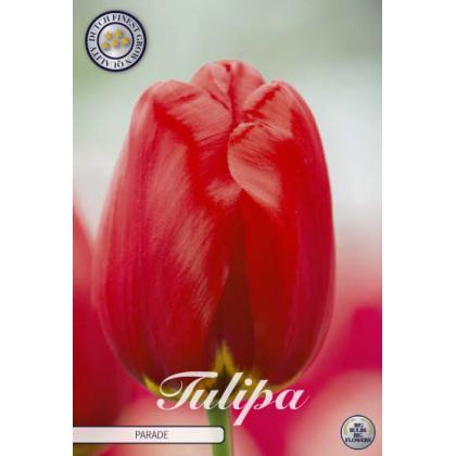 Tulipán Darwin Hybrid- Parade 7ks