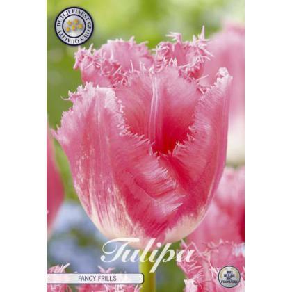 Tulipán Fringed- Fancy Frills 7ks