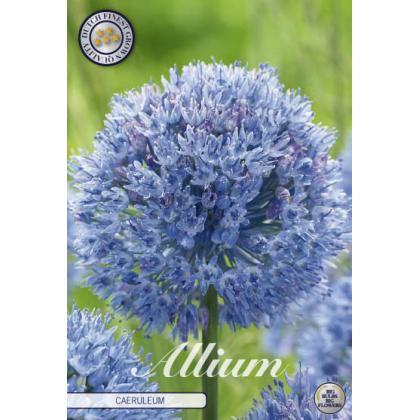 Allium Caeruleum 15ks