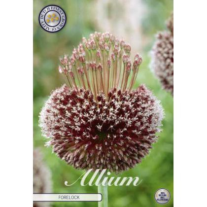 Allium Amethystinum- Forelock 1ks
