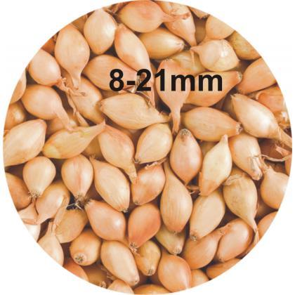 Cibuľa sadzačka Contado 8-21mm, 0,25kg