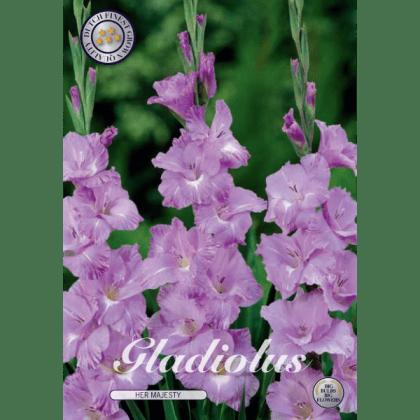 Gladiolus - Her Majesty 10ks