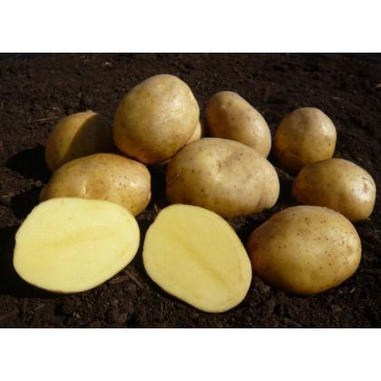 Jelly - slovenské sadbové zemiaky 5kg