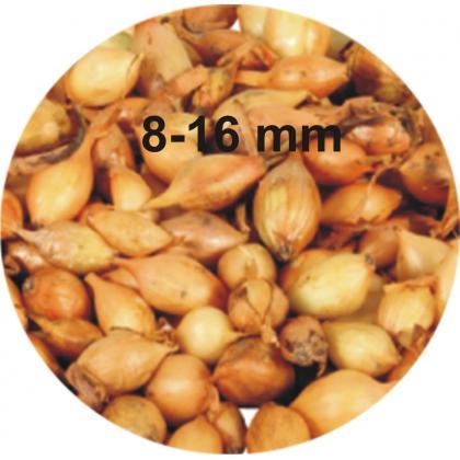 Cibuľa sadzačka Všetana 8-16mm, 0,5kg