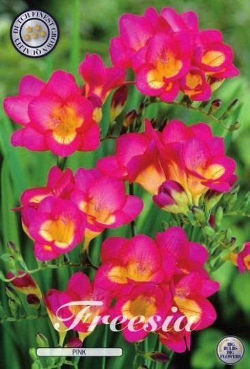 Fresia - Single Pink