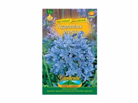 Agapanthus - Blue 1ks