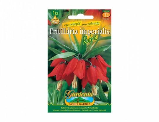 Fritillaria(korunkovka) -Rubra 1ks
