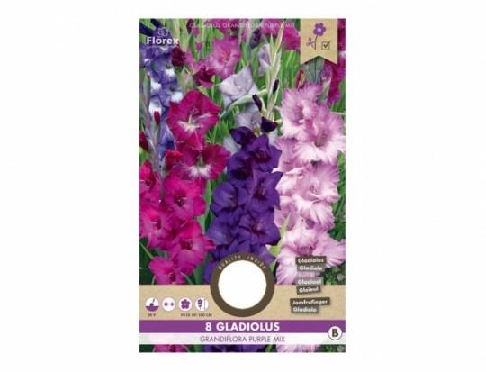 Gladiolus PURPLE mix 8ks