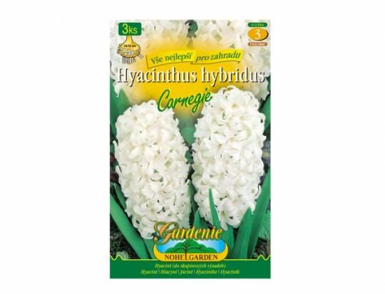 Hyacint - Carnegie 3ks