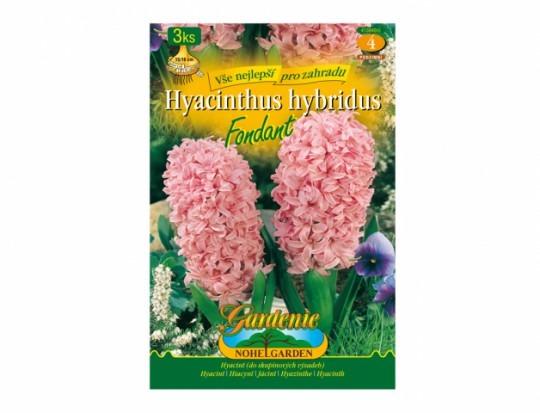 Hyacint Fondant 3ks