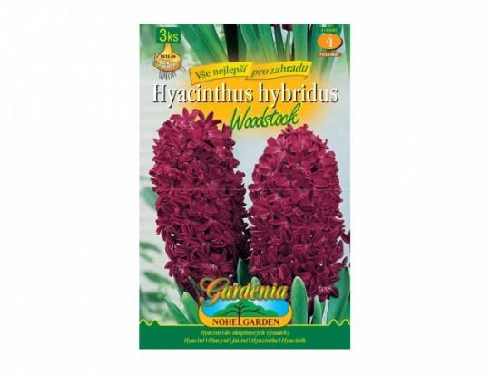 Hyacint Woodstock 3ks