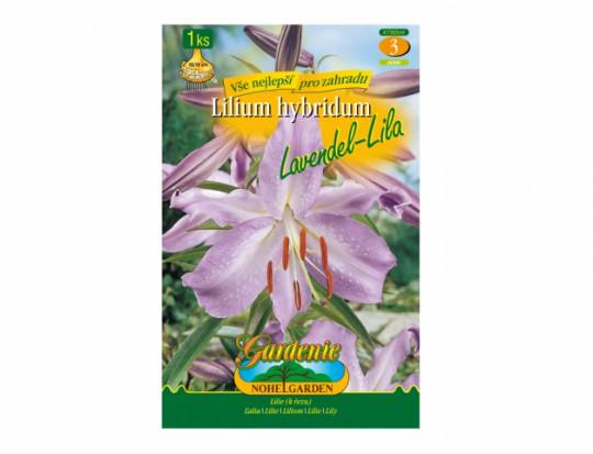 Lilium LAVENDEL-LILA 1ks