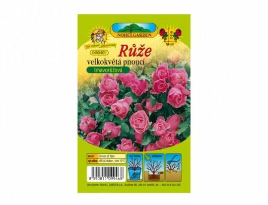 Ruža veľkokvetá ťahavá - tmavo ružová 1ks