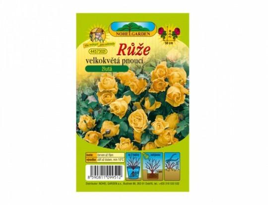Ruža veľkokvetá ťahavá - žltá 1ks