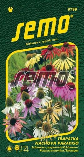 Echinacea PARADISO 12s
