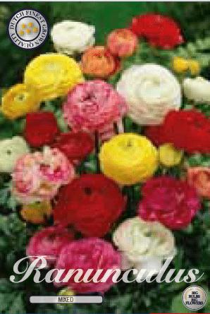Ranunculus - Mixed 10ks