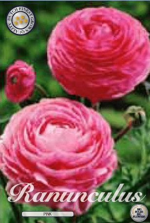 Ranunculus - Pink 10ks