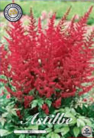 Astilbe - Red 1ks