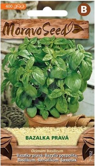 Bazalka zelená 400s