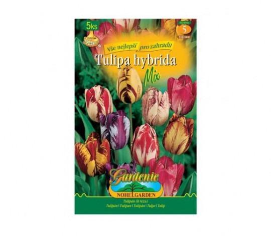 Tulipán rembrandt- mix 5ks