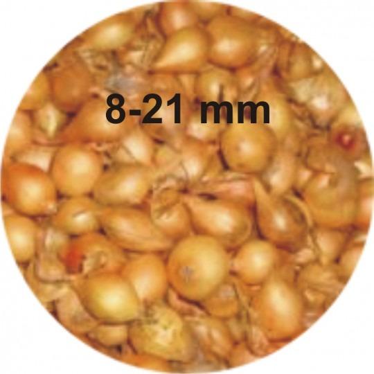 Cibuľa sadzačka Štutgart 8-21mm, 0,5kg