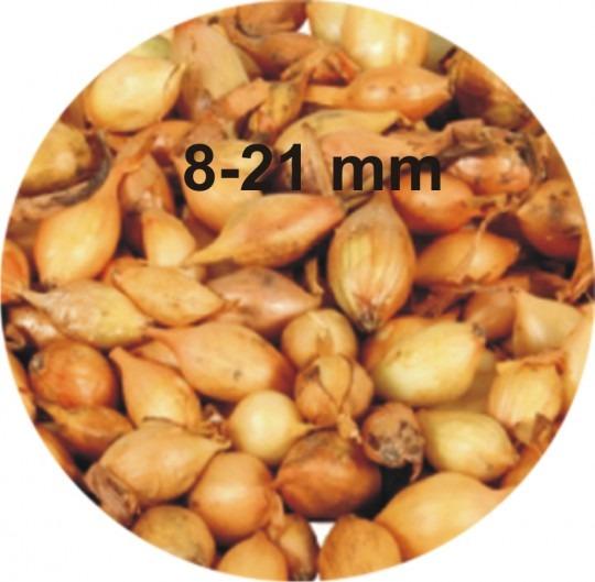 Cibuľa sadzačka Všetana 8-21mm, 0,5kg