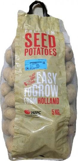 Vivaldi - holandské sadbové zemiaky 5kg